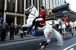 Vienna's Lippizzaner Stallions Visit New York City